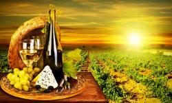 Виноградарство СКФО: от лозы до прилавка