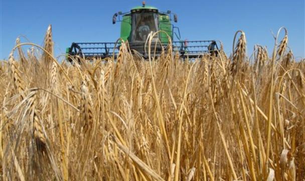 ВСКФО лидером поувеличению урожайности стала Ингушетия