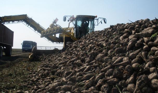 Аграрии начали уборку сахарной свёклы